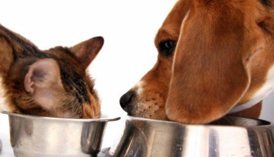 Mon chien peut-il manger les croquettes du chat, et vice-versa ?