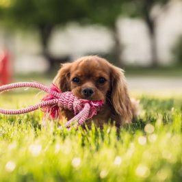 Comment débarrasser mon chien des parasites ?