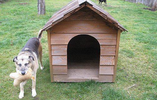 Chenil extérieur : les clefs pour un chien heureux