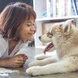 10 conseils pour un chien heureux en appartement