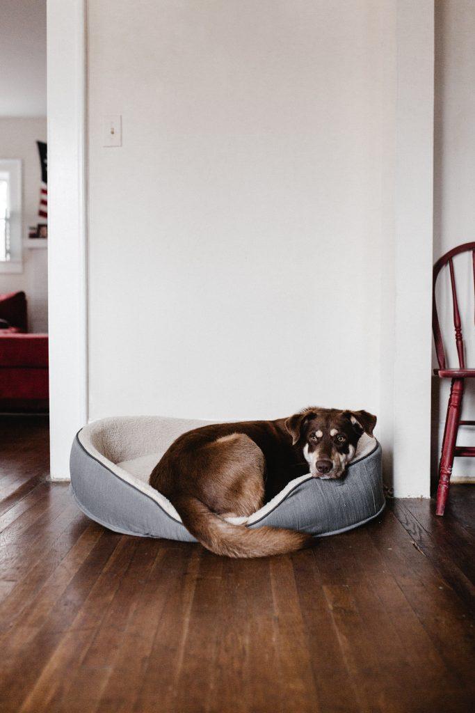 Un chien dans son panier