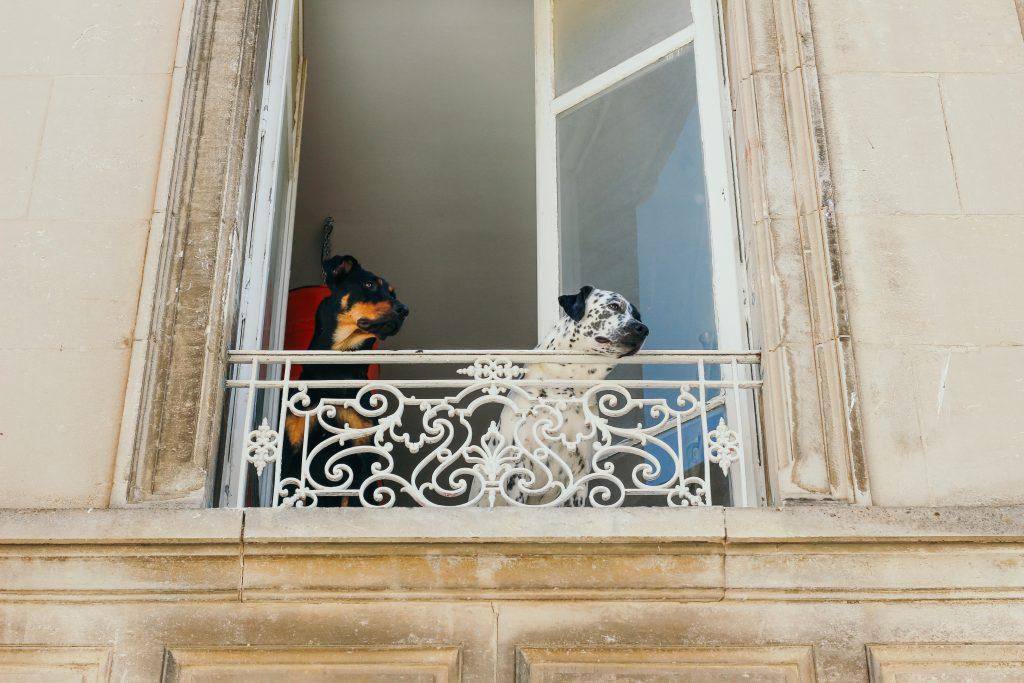 Deux chiens qui regardent par la fenêtre