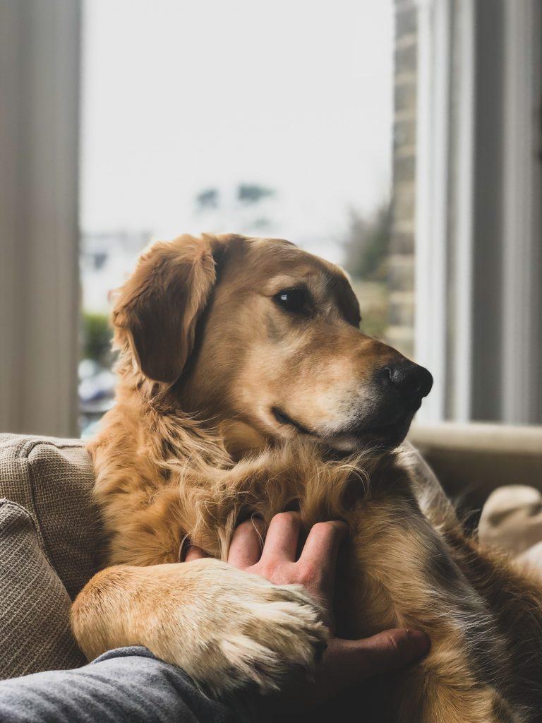 Un chien qui demande des caresses
