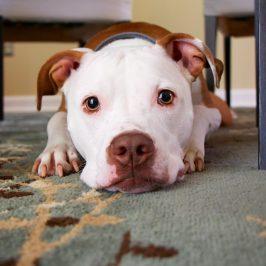 5 conseils pour aménager son appartement avec un chien