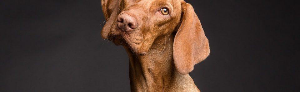 Qu'est-ce qu'un chien LOF ?